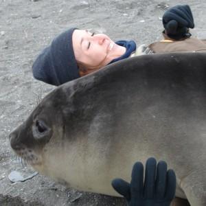 Friendly elephant seal pup on South Georgia Island